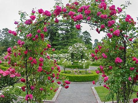 Best Way To Create The Garden Roses Arrangement