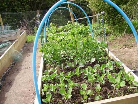 Buy Vegetable Plant 2 Best Way to Buy Vegetable Plant