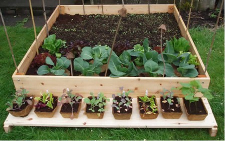 Buy Vegetable Plant Best Way to Buy Vegetable Plant