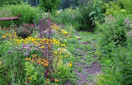 Control Weeds 1 Best Way to Control Weeds in Your Vegetable Garden