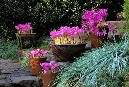 Garden with Container Best Way to Quickly Decorate Your Garden with Container