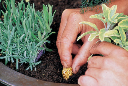 Growing Herbs Best Way to Control Different Kinds of Pests When Growing Herbs
