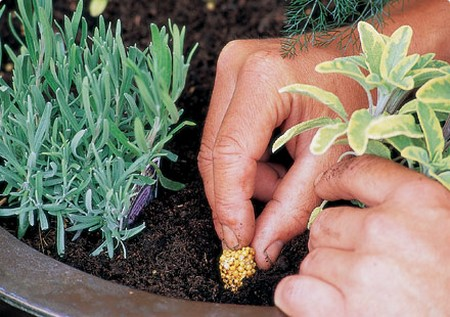 Growing Herbs1 Best Way to Prevent Different Kinds of Diseases When Growing Herbs