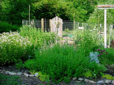 Herb in Garden 1 Best Way to Create a Herb Collection in your Garden