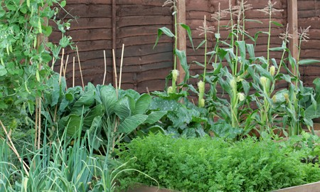 Planningvegetable Garden On Plot Best Way To Plan A Mini Vegetable In Your Small