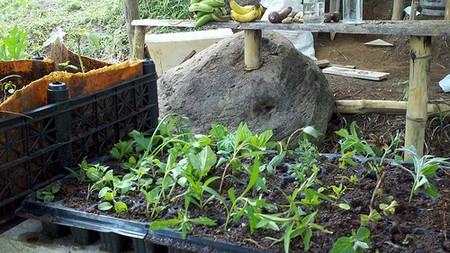 Propagate Herbs 1 Best Way to Propagate Herbs