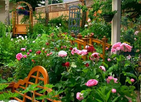 Scented Roses Garden 2 Best Way to Plant Scented Roses for Garden Walls and Fences