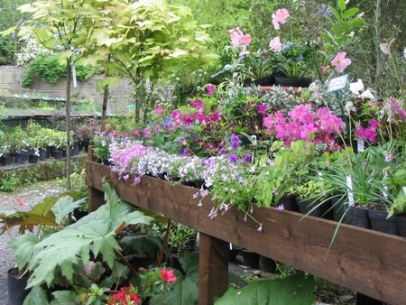 Select Herbs to Plant 1 Best Way to Select Herbs to Plant