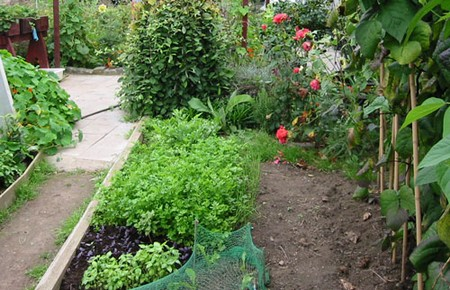 Vegetable Garden 2 Best Way to Control Pests in Your Vegetable Garden
