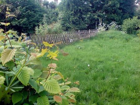 Wildlife Garden 1 Best Way to Create a Wildlife Garden