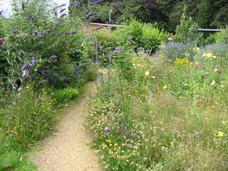 Wildlife Garden Best Way to Create a Wildlife Garden