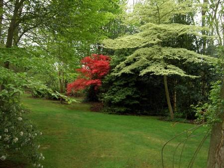 Woodland Garden 11 Best Way to Build a Woodland Garden