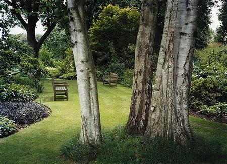 Woodland Garden 21 Best Way to Build a Woodland Garden