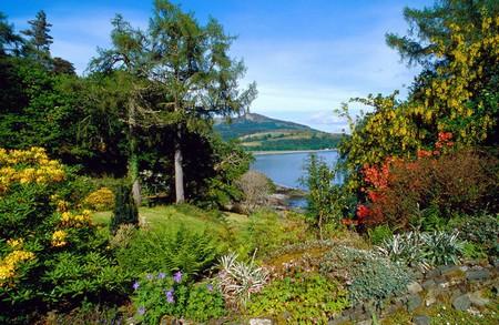 Woodland Garden1 Best Way to Build a Woodland Garden