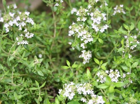herbs Best Way to Treat Different Kinds of Respiratory Tract Problems with Herbs