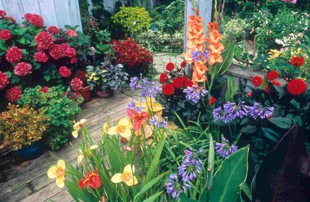 Create Container Garden Best Way to Create a Container Garden