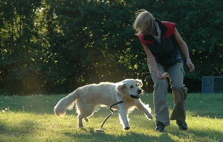 Dog Come When Called 1 Best Way to Train Your Dog to Come When Called