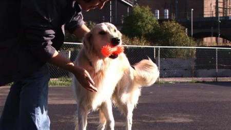 Dog Come When Called Best Way to Train Your Dog to Come When Called