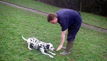 Dog Lie Down 1 Best Way to Train Your Dog to Lie Down