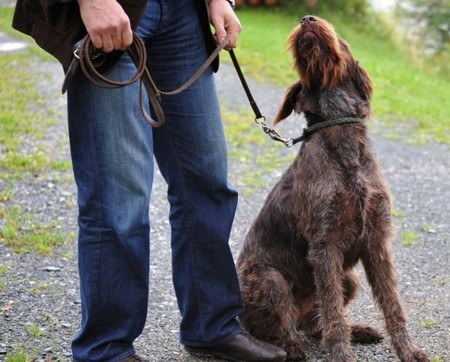 Dog to Sit Best Way to Train Your Dog to Sit
