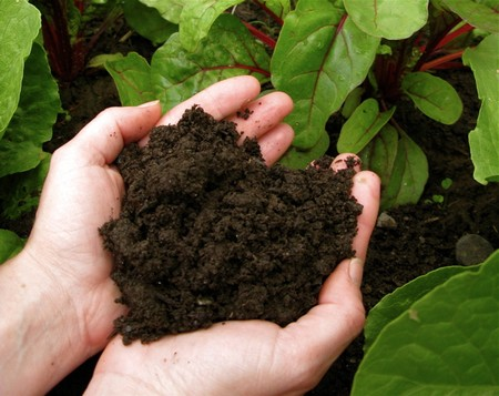 Garden soil 2 Best Way to Understand the Soil in Your Garden