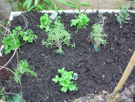 Growing Herbs 1 Best Way to Control Pests and Diseases When Growing Herbs