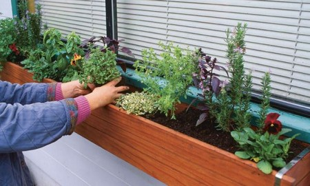 Growing Herbs Best Way to Control Pests and Diseases When Growing Herbs