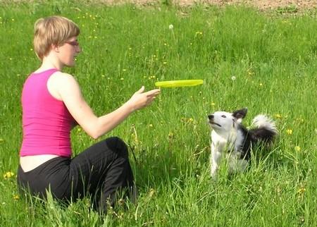 Train Dog to Catch 1 Best Way to Train Your Dog to Catch