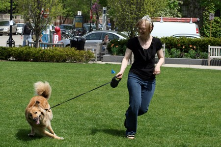 Train Dog to Hold Leash 1 Best Way to Train Your Dog to Hold the Leash