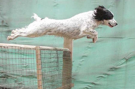 Train Dog to Jump Best Way to Train a Dog to Jump