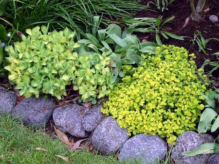 Use Herbs as Ground Cover Best Way to Use Herbs as Ground Cover