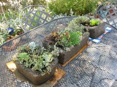 Use Troughs 3 Best Way to Use Troughs in Your Garden