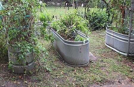 Use Troughs Best Way to Use Troughs in Your Garden