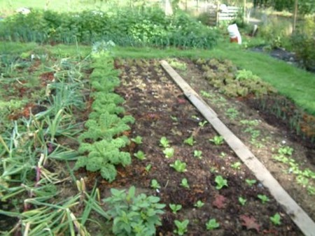 Vegetable Garden 1 Best Way to Use Space Efficiently in Your Vegetable Garden