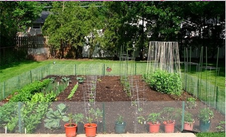 Vegetable Garden 2 Best Way to Use Space Efficiently in Your Vegetable Garden