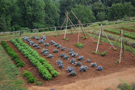 Best Way to Use Space Efficiently in Your Vegetable Garden