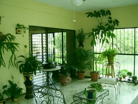 Home with Plants Best Way to Feng Shui Your Home with Plants